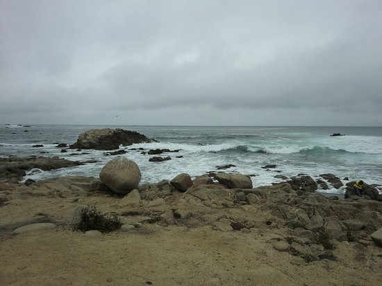 shoreline at Asilomar State Beach in Pacific Grove, California