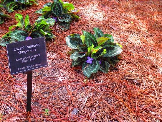 Coastal Georgia Botanical Gardens Photo