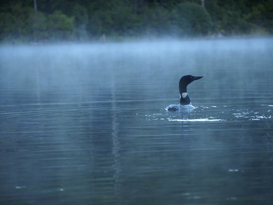 Holderness, NH: Da Loon