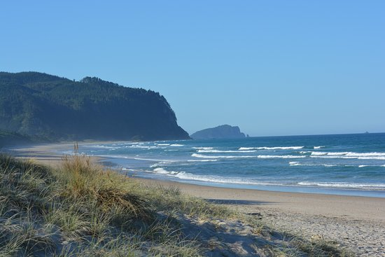 Opoutere Coastal Camping : great beach
