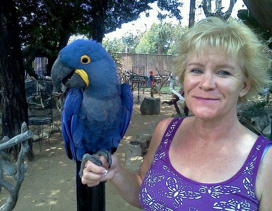 Del Mar, CA: Hyacinth Macaw, I think it was Abby?