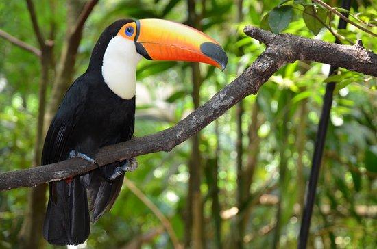 Tukan Picture Of Parque Das Aves Foz Do Iguacu