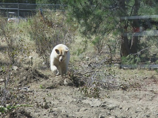 Kamloops Wildlife Park: great up close viewing