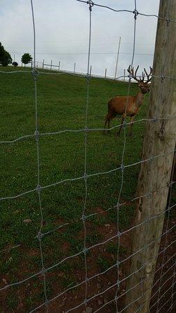 Catawissa, PA: Big bucks at Red deer at Rolling Hills