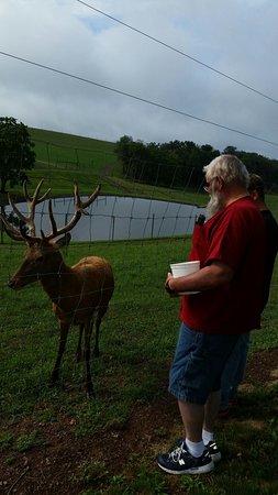 Catawissa, Пенсильвания: Big bucks at Red deer at Rolling Hills