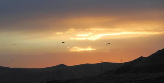 Clarkston, WA: Sunset with geese