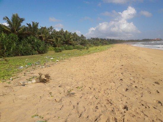 Μπεντότα, Σρι Λάνκα: 20160811_160701_large.jpg
