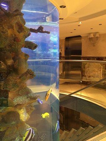 Flatiron Hotel Aquarium