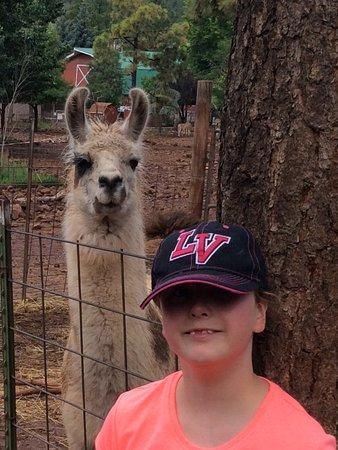 Williams, AZ: Say cheese!!