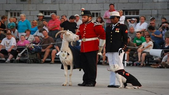 Holiday Inn Express Hotel & Suites Kingston: Visit Fort Henry and David the Goat!
