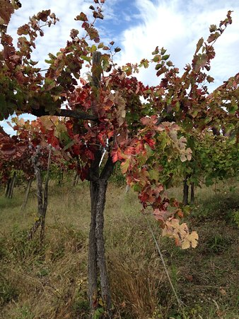 Paduli, Italia: autunno in vigna