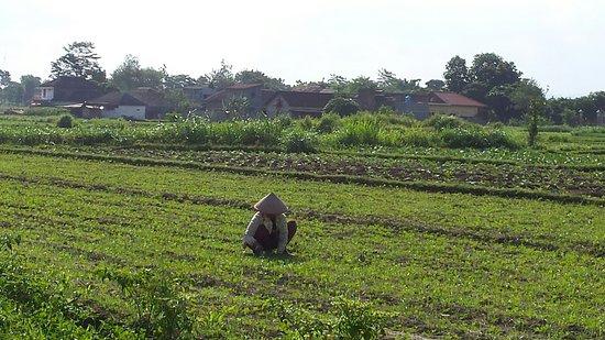 Semarang Jogja Butuh Waktu 150 menit | Tips Wisata Murah: Home