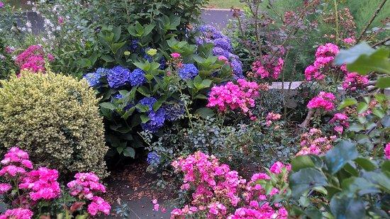 Saint-Esteben, France : De si belles fleurs