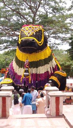Decorated Nandi..