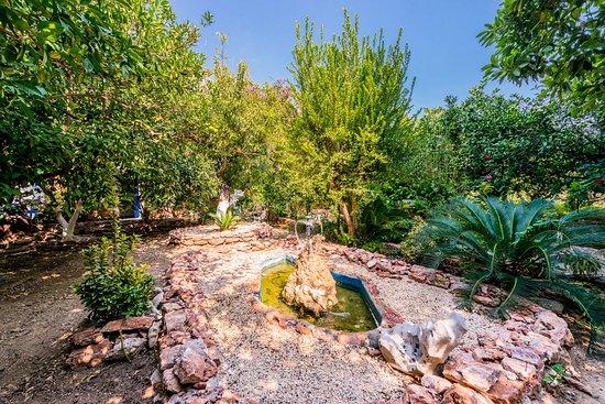 Alpha Stegna Sun: The Garden Pond