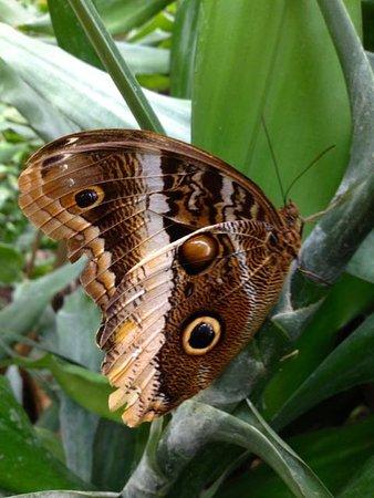 vlindertuin leidschendam