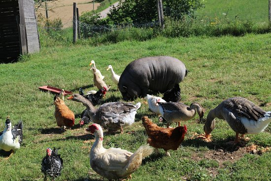 Ferme des Ours Gourmands