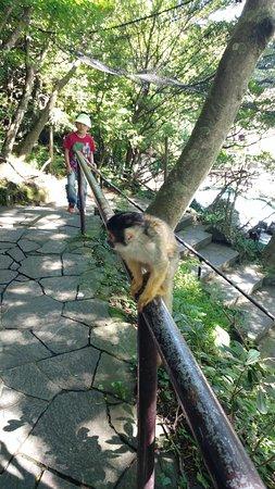 Izu Shaboten Park - Picture of Great Nature Tours, Ito - TripAdvisor