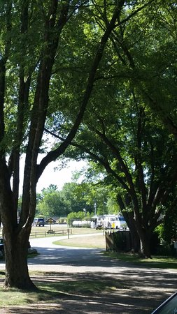 Boston/Cape Cod KOA: Great trees