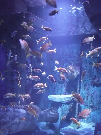 Marine Habitat at Atlantis: Aquarium