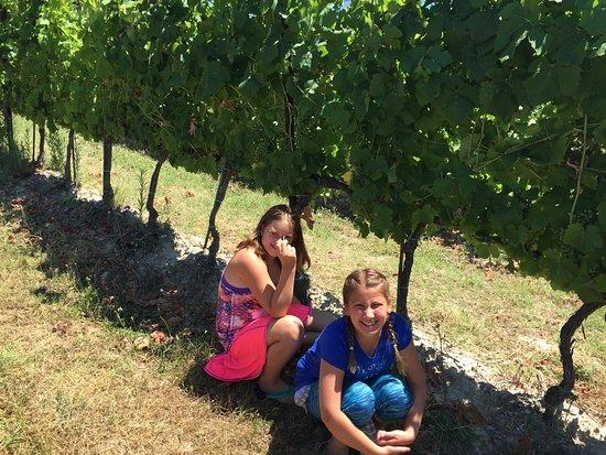 Decugnano Dei Barbi Cooking Class: The vineyard