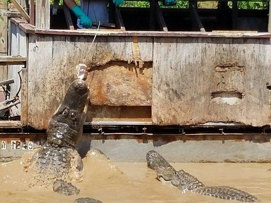 Natchitoches Alligator Park
