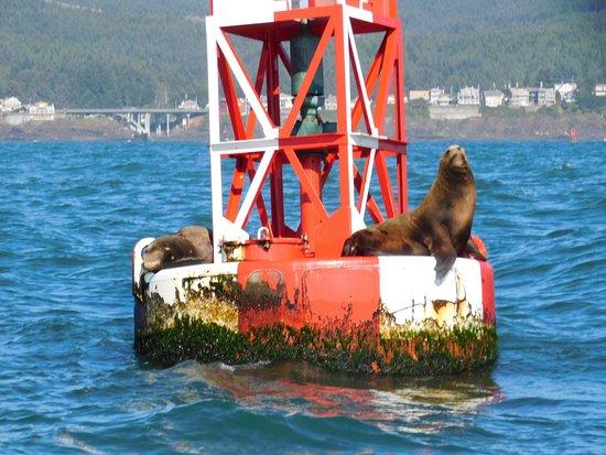 Depoe Bay, OR: sea lion