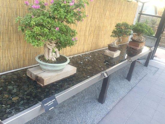 Denver Botanic Gardens: Well done humidity tray for tropical bonsai specimens