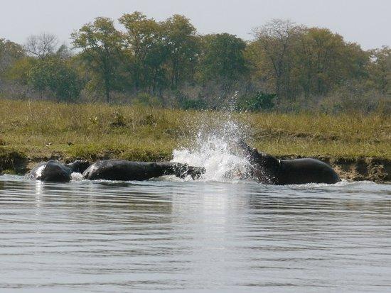 Liwonde National Park Foto