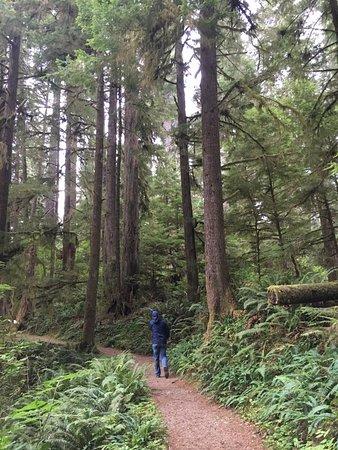 Quinault Loop Trail