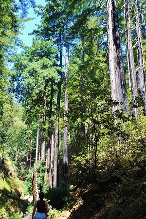 Big Sur Campground & Cabins: So tall! (Hiking)