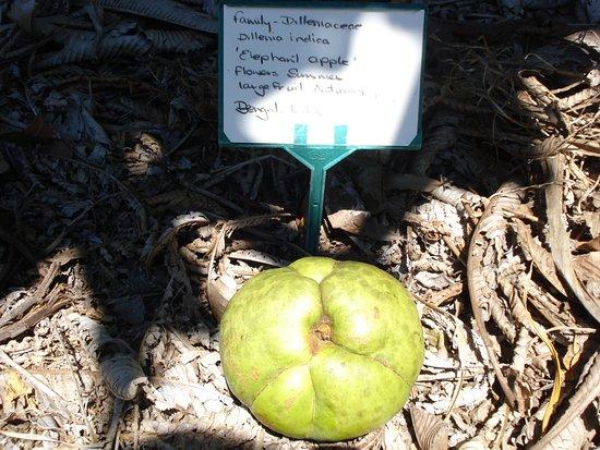 Cooroy, Australien: Noosa Botanic Gardens