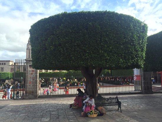 Hotel Posada de las Monjas: Beautiful trees