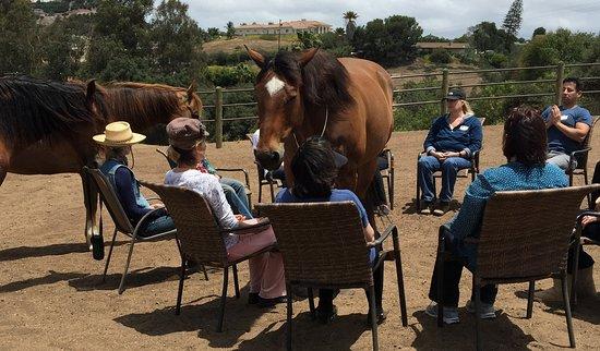 Bonsall, CA: Healing Horse Meditation Circle