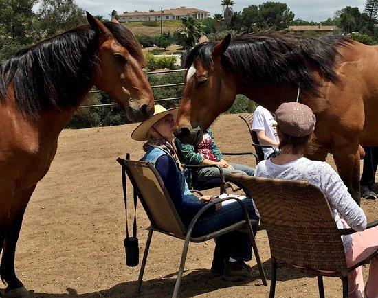 Healing Horse