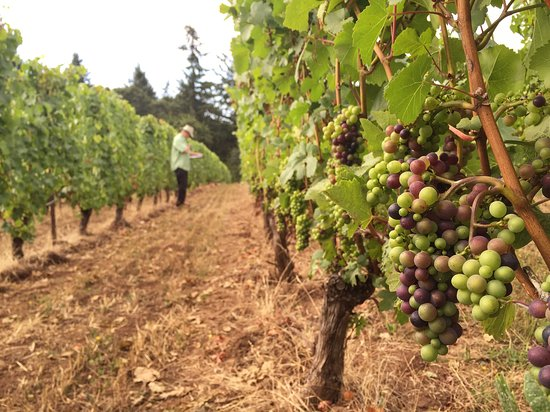 Wilsonville, Oregón: roughly 60 planted acres of Pinot Noir, Chardonnay, and Pinot Gris