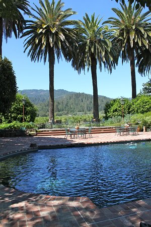St. Helena, CA: Estate Pool with vineyards in the background