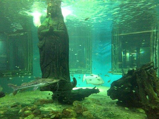 Aquario de Aparecida