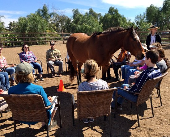 Bonsall, CA: Healing Horse Meditation Circle