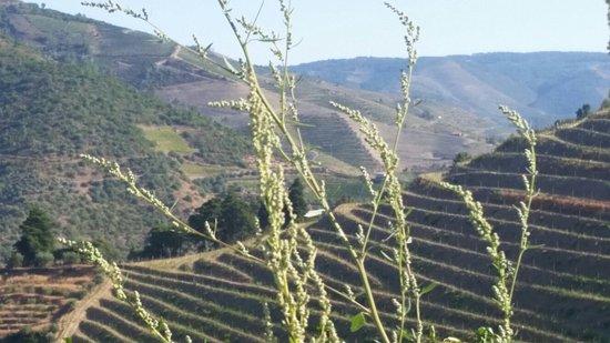 Folgosa, Portugalia: 20160810_093529_large.jpg
