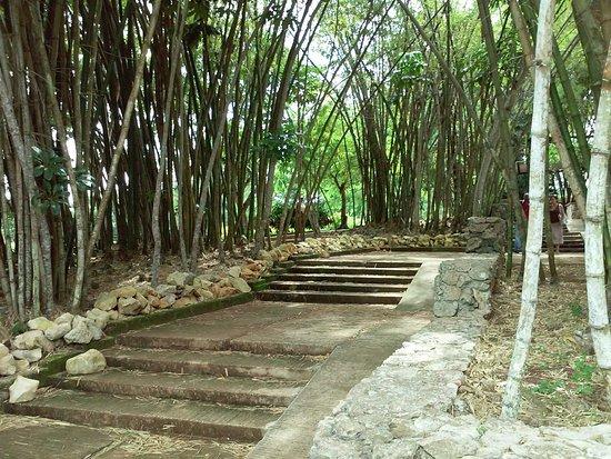 Jardin botanico nacional havana cuba top tips before for Jardin botanico nacional