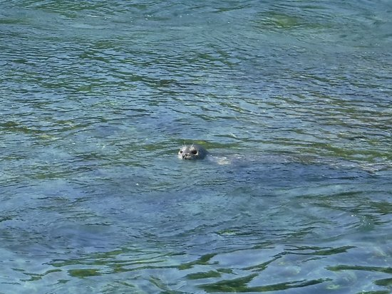 Port McNeill, Kanada: The seals are watching us!