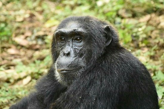 Kibale National Park: FB_IMG_1471046438549_large.jpg