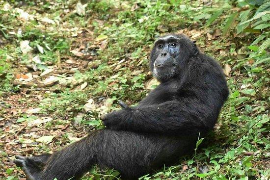 Kibale National Park: FB_IMG_1471046482087_large.jpg