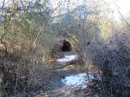 South Mills, NC: Canal trail in winter