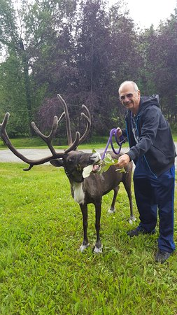 Agate Inn, Inc.: Yes, that's a real live reindeer!