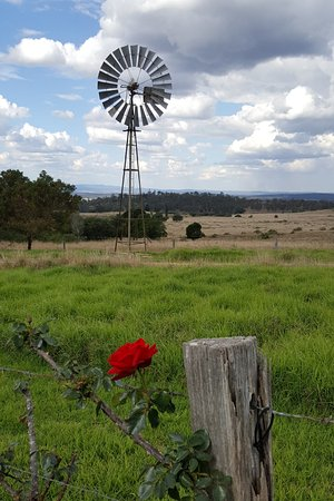 windmill at Crane Wines, Kingaroy
