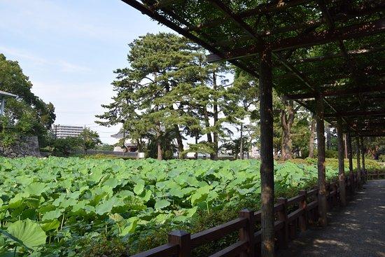 Gyokan-no-Fuji
