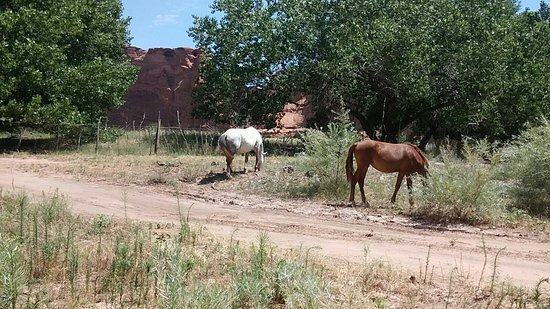 Canyon de Chelly National Monument: IMG-20160731-WA0008_large.jpg