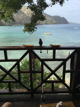 Castara, Tobago: This guy came every day for breakfast